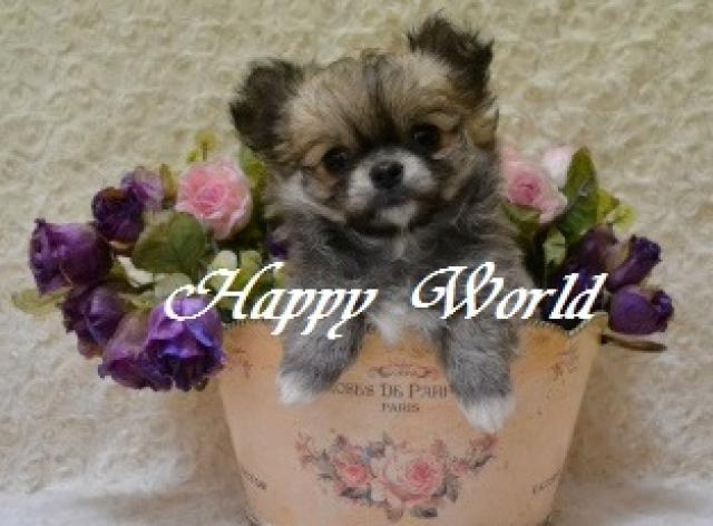 HAPPY WORLD