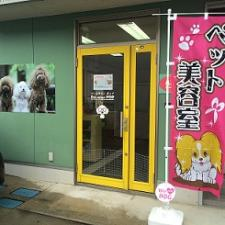 Pet salon POP