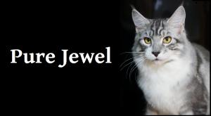 Cattery PureJewel