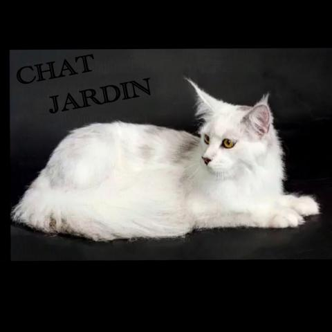 Cattery CHAT JARDIN
